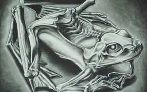 Картинка 1946, Mumified Frog, Maurits Cornelis Escher