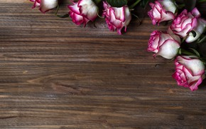 Картинка цветы, розы, розовые, pink, flowers, beautiful, roses