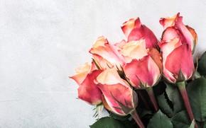 Картинка розы, букет, pink, beautiful, roses