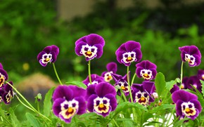 Картинка flower, face, purple