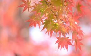Картинка осень, листья, фон, красота