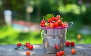 Картинка лето, свет, вишня, ягоды, фон, урожай, ведро, черешня, боке, ведерко