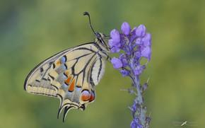 Картинка цветок, капли, бабочка, утро