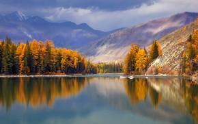 Картинка лес, пейзаж, горы, природа, река, Алтай, Аргут