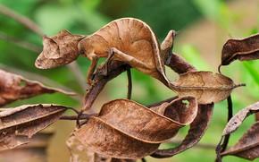 Картинка ящерица, маскировка, сухие листья, гекон