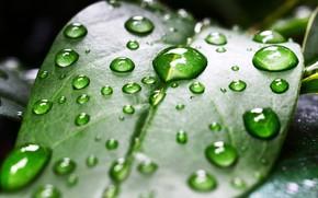 Картинка вода, капли, макро, природа, капли воды