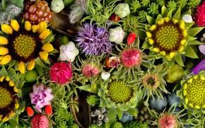 Картинка макро, цветы, панно