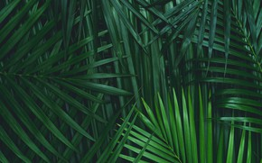 Картинка Green, Palm tree, Foliage