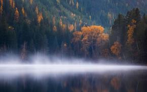 Картинка лес, вода, деревья, туман, озеро, гладь