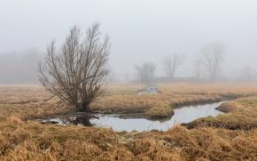 Картинка поле, туман, весна