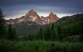 Картинка зелень, лес, лето, небо, трава, горы, ветки, вершины, ели, луг, Доломиты