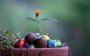 Картинка цветок, конфеты, горшок с цветком, Fleur Walton