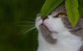 Картинка кошка, листья, фон, мордочка, котейка