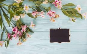 Картинка цветы, colorful, wood, pink, flowers, beautiful, spring, lily