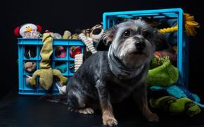 Картинка одежда, собака, корзинки