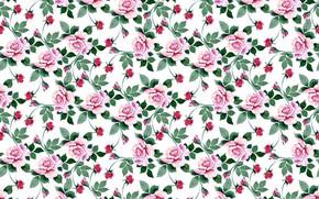 Картинка белый, фон, розы, текстура
