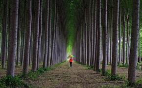 Картинка дорога, лес, трава, деревья, ветки, природа, парк, одиночество, настроение, стволы, женщина, человек, радуга, зонт, аллея, …