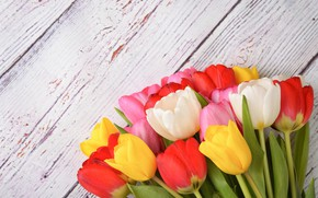 Картинка цветы, colorful, тюльпаны, wood, flowers, tulips, spring