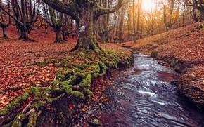 Картинка осень, лес, листья, солнце, свет, деревья, ветки, корни, ручей, стволы, листва, мох, водоем, лесной