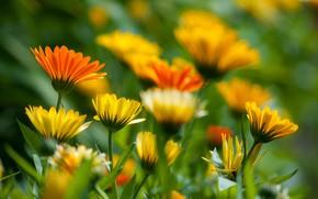 Картинка солнце, цветы, утро, боке