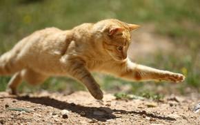 Картинка кошка, кот, поза, прыжок, бабочка, рыжий, охотник
