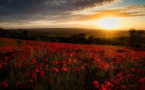 Картинка поле, закат, цветы, Англия, маки, England, Гэмпшир, Hampshire, Чилкомб, Chilcomb