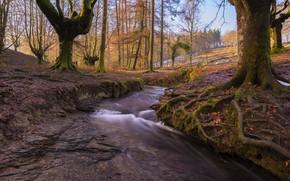 Картинка лес, природа, речка