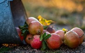 Картинка граната, фрукт, ведро