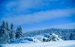 Картинка landscape, nature, wood, winter, snow, serbia, kopaonik