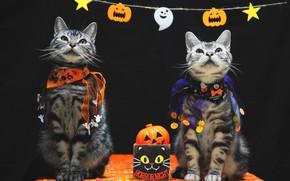 Картинка осень, взгляд, праздник, коты, пара, костюм, наряд, тыквы, черный фон, парочка, два, хеллоуин, сидят, два …