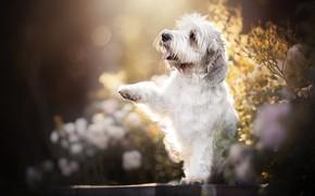 Картинка лапа, собака, боке