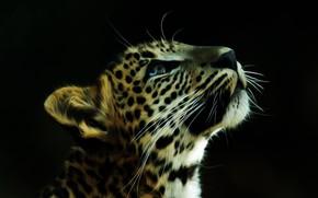 Картинка морда, фон, леопард, раскраска