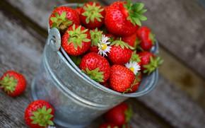 Картинка цветы, Клубника, ягода