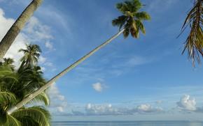 Картинка небо, тропики, пальмы, океан, Pacific Ocean, Муреа, Moorea, French Polynesia, Тихий океан, Французская Полинезия