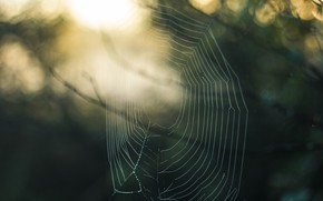 Картинка лес, лето, паутина, утро, паутика