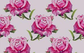Картинка фон, розы, бутоны