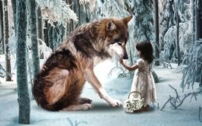 Картинка зима, лес, волк, девочка