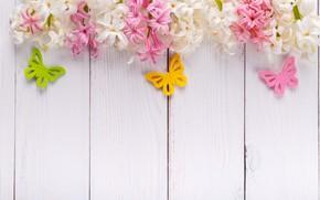 Картинка бабочки, цветы, розовые, wood, pink, flowers, spring, гиацинты, butterflies