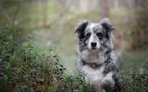 Картинка листья, природа, собака, пестрая