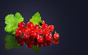 Картинка листья, макро, ягоды, фон, черный, смородина, спелая