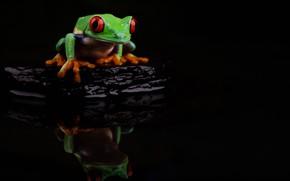 Картинка вода, камень, лягушка