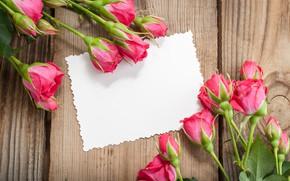 Картинка розы, букет, розовые, бутоны