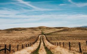 Картинка дорога, небо, трава, природа, холмы, забор, поля, скот