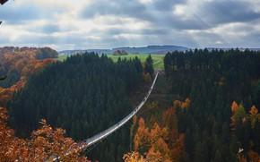 Обои Германия, подвесной мост, Geierlay, Рейнланд-Пфальц