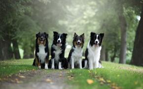 Картинка зелень, язык, собаки, трава, взгляд, листья, деревья, природа, поза, парк, фон, вместе, листва, лапы, дружба, …