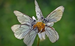 Картинка цветок, бабочка, мотылёк