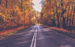 Картинка дорога, осень, лес, листья, солнце, деревья, жёлтые