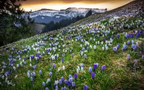 Картинка весна, Schweiz, Kanton Bern, Emmental