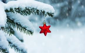 Картинка зима, снег, звезда, елка, ветка, Новый Год, Рождество, christmas, winter, snow, merry, decoration, red star, …