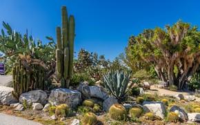 Картинка небо, солнце, деревья, камни, Калифорния, кактусы, США, скамейки, кусты, South Coast Botanic Garden